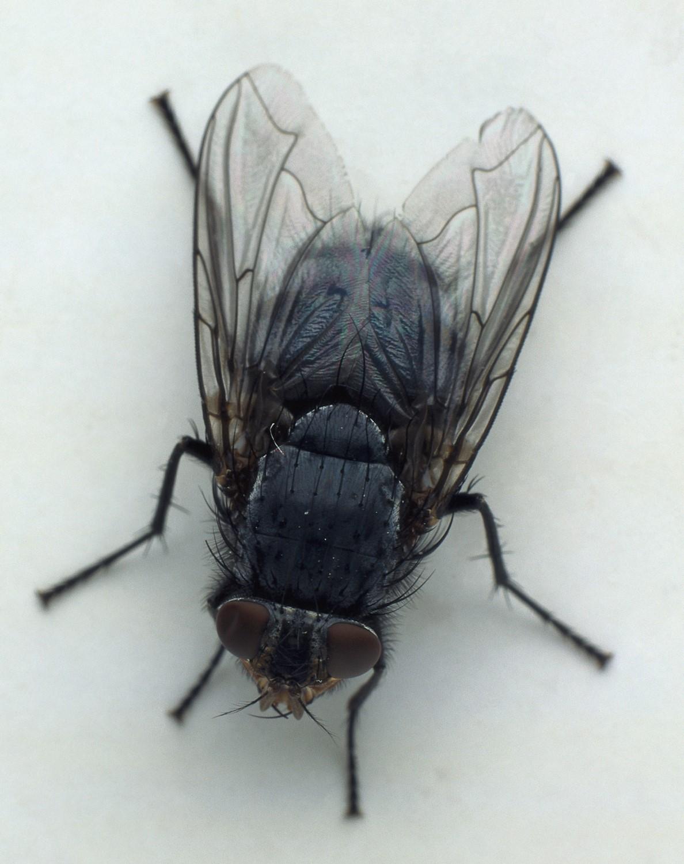 급해요ㅠㅠㅠ 곤충 파리 사진 집에서 찍은 것 같은 사진 올려주세요ㅠㅠㅠ