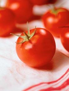 동의보감도 인정한 '토마토'