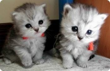 고양이 상자 고양이 종류와 사진
