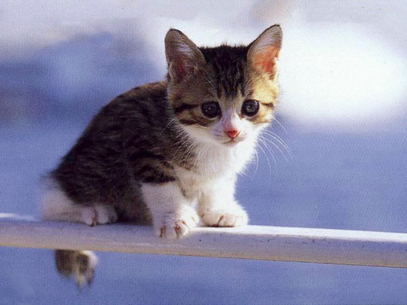 for I gattini piccoli